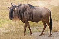 GNU wiki, GNU review, GNU history, GNU news