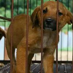 Against Dog Meat wiki, Against Dog Meat review, Against Dog Meat history, Against Dog Meat news