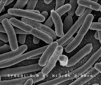 Biology wiki, Biology history, Biology news