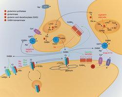 GABAergic Synapse wiki, GABAergic Synapse history, GABAergic Synapse news