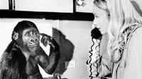 Koko (gorilla) wiki, Koko (gorilla) bio, Koko (gorilla) news